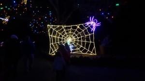 spider-denver-zoo-lights